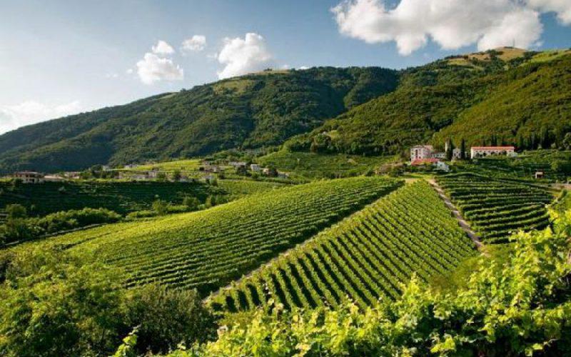 Prosecco Valdobbiadene Hills - A Casa di Ita
